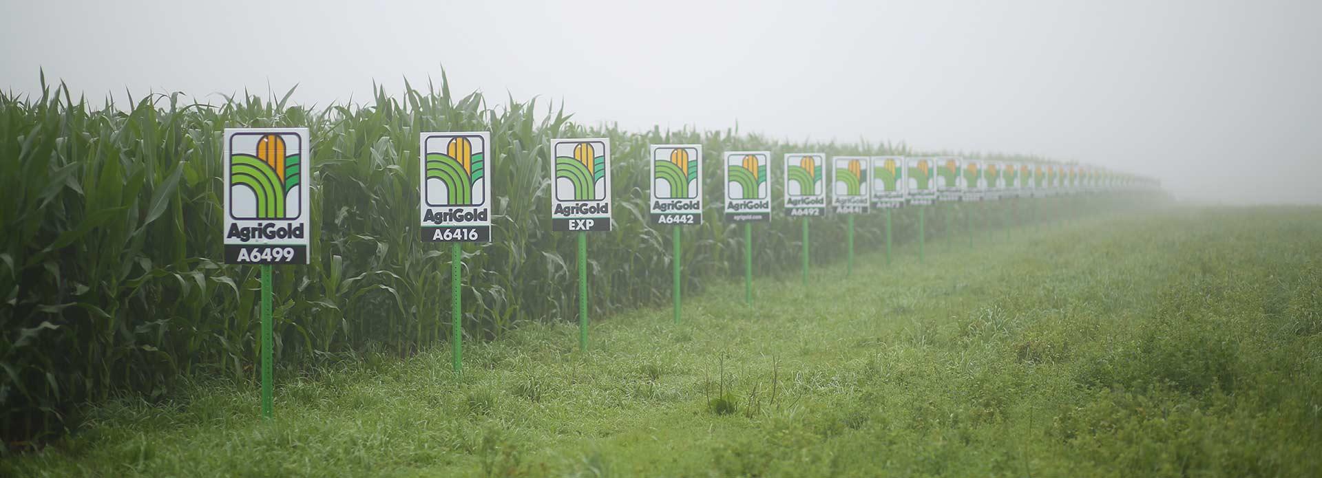 Eldon-C-Stutsman-Inc-Agronomy-AgriGold-Plot