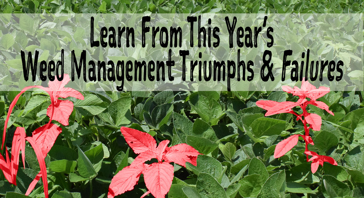 Learn-from-this-year's-weed-management-triumphs-and-failure
