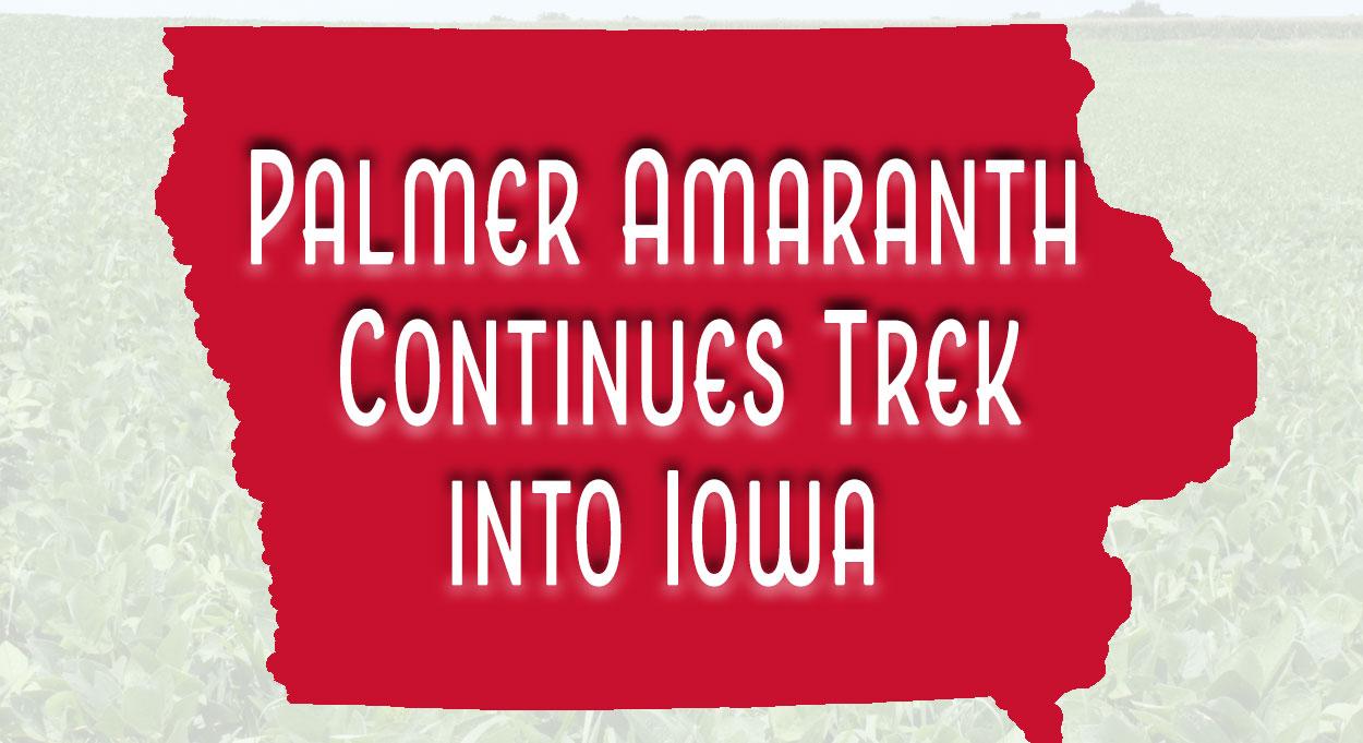 Eldon-C-Stutsman-Inc-Palmer-Amaranth-In-Iowa