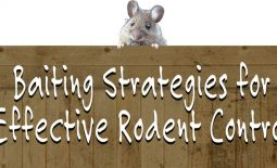 eldon-c-stutsman-inc-baiting-strategies-for-rodent-control