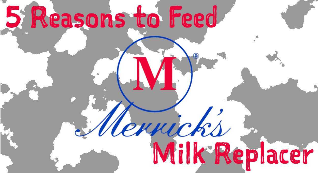 Eldon-C-Stutsman-5-Reasons-to-Feed-Merricks-Milk-Replacer