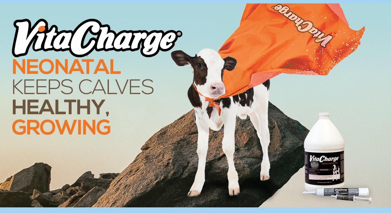 Eldon-C-Stutsman-Inc-VitaCharge-Neonatal-Keeps-Calves-Healthy-Growing
