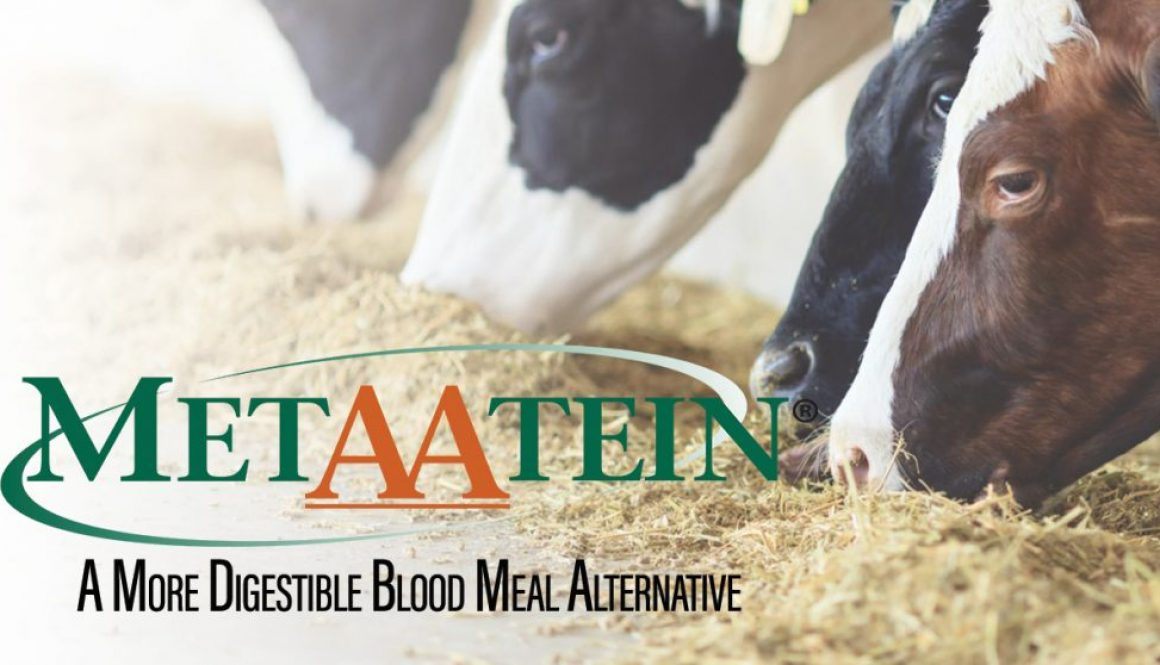 Eldon-C-Stutsman-Inc-MetAAtein-A-More-Digestible-Blood-Meal-Alternativep