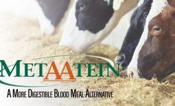 Eldon-C-Stutsman-Inc-MetAAtein-A-More-Digestible-Blood-Meal-Alternativep