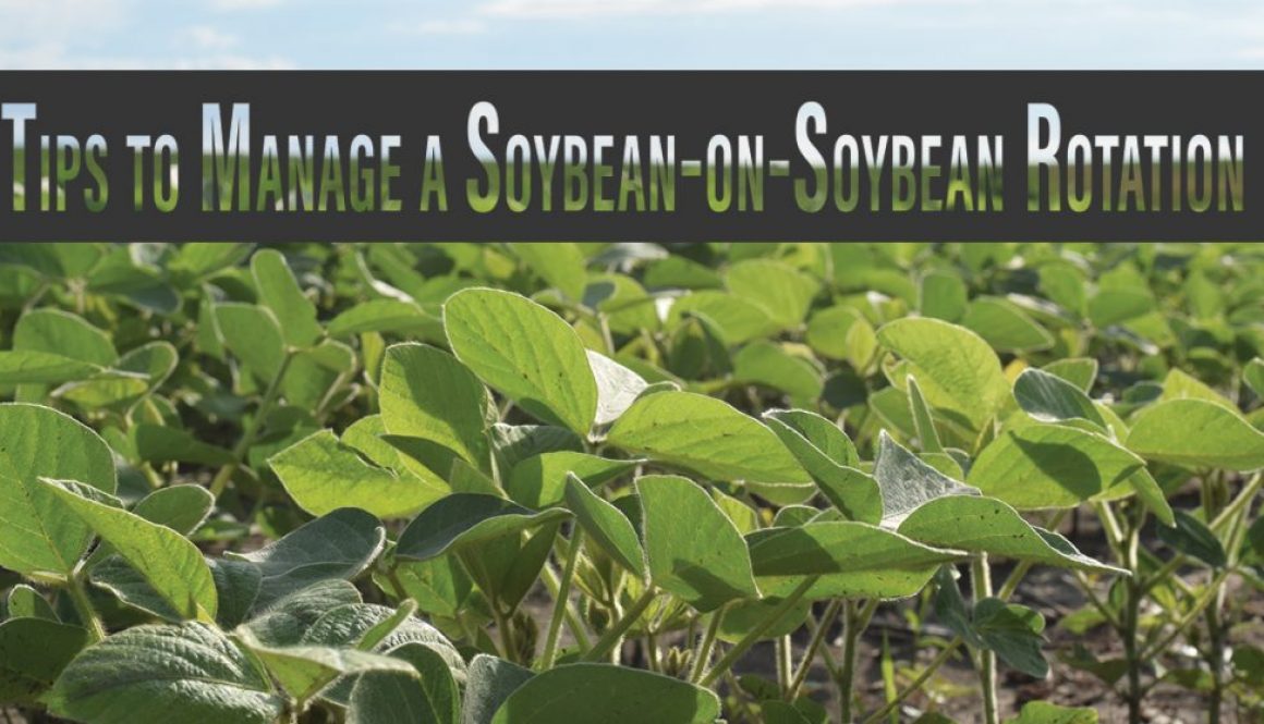 Eldon-C-Stutsman-Inc-Tips-to-Manage-a-Soybean-on-Soybean-Rotation