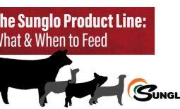Sunglo-blog-header