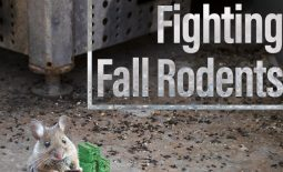 Eldon-C-Stutsman-Inc-Fighting-Fall-Rodents