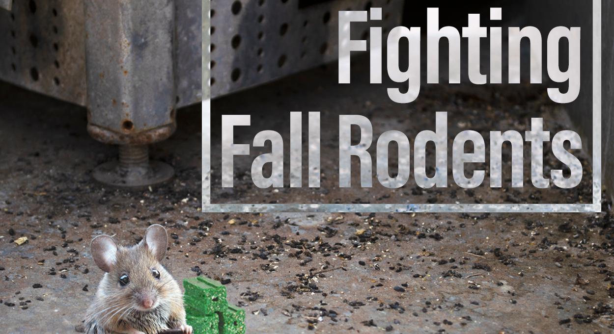 Eldon-C-Stutsman-Inc-Fighting-Fall-Rodents