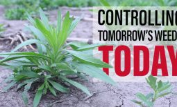 Eldon-C-Stutsman-Inc-Controlling-Tomorrows-Weeds-Today