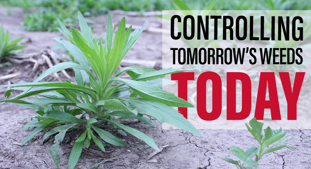Eldon-C-Stutsman-Inc-Controlling-Tomorrows-Weeds-Today