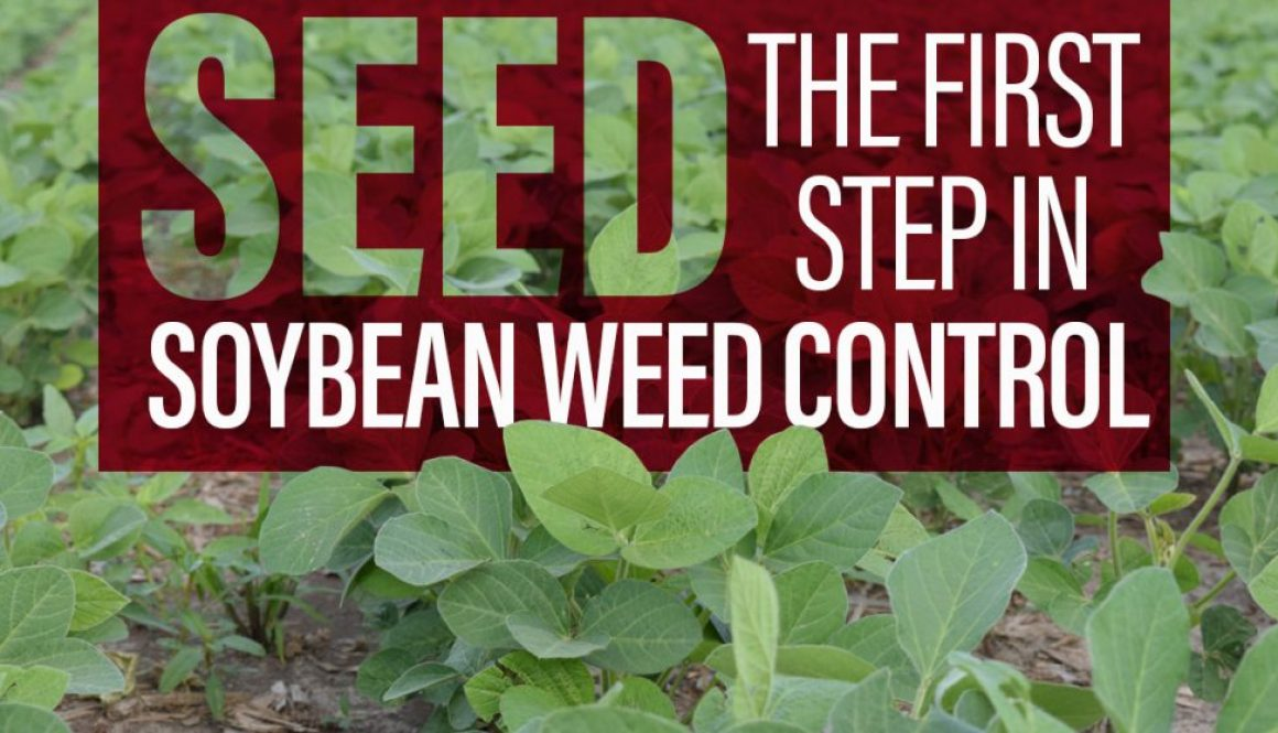 Eldon-C-Stutsman-Inc-Seed-the-First-Step-in-Soybean-Weed-Control