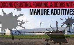 Eldon-C-Stutsman-Inc-Reducing-Crusting-Foaming-&-Odors-with-Manure-Additives