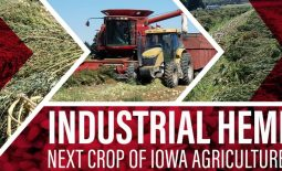 Eldon-C-Stutsman-Inc-Industrial-Hemp-Next-Crop-of-Iowa-Agriculture