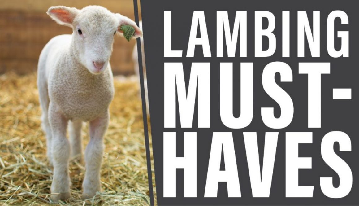 Eldon-C-Stutsman-Inc-Lambing-Must-Haves