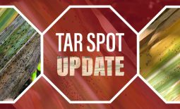 Eldon-C-Stutsman-Inc-Tar-Spot-Update