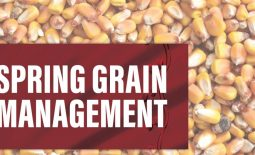 Eldon-C-Stutsman-Inc-Spring-Grain-Management