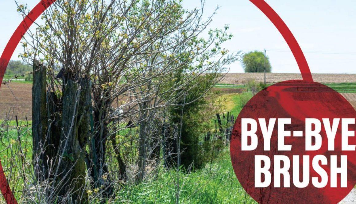 Unruly Trees on Fenceline-Brush Management Tools